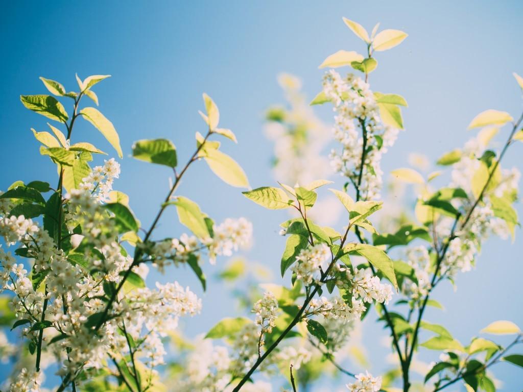 花粉症アロマ