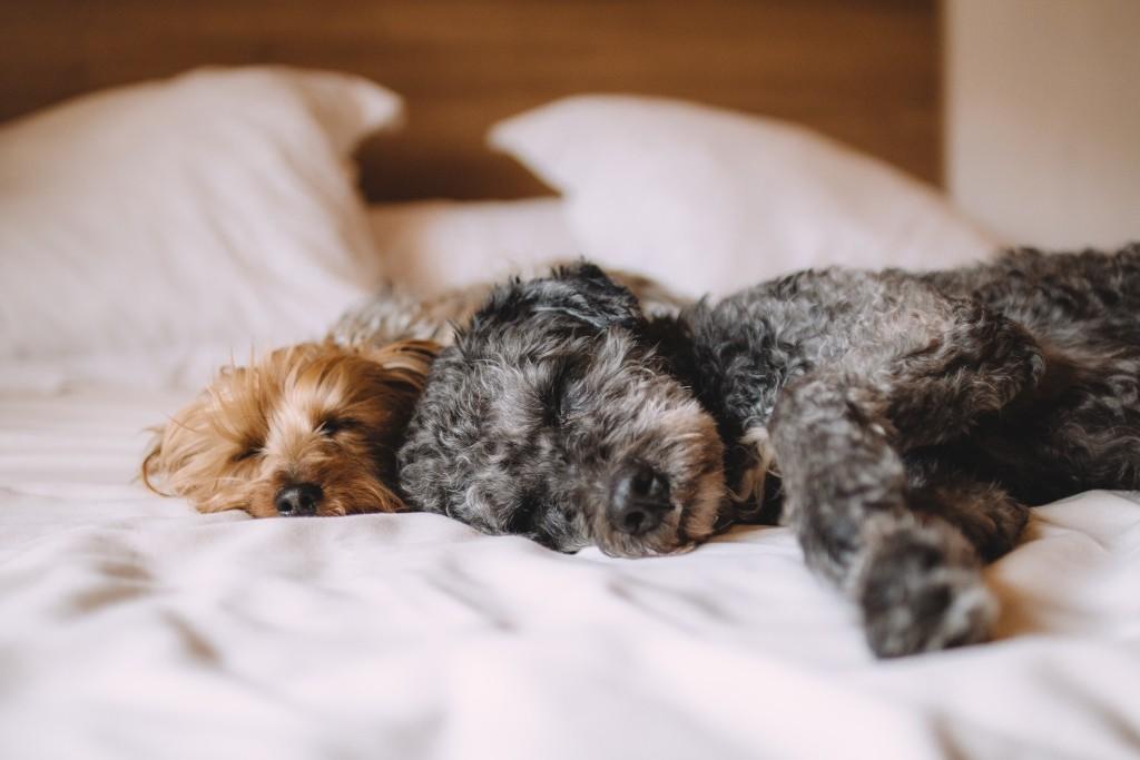 眠れない、眠りが浅いときに役立つアロマ