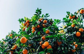 柑橘系のアロマオイル