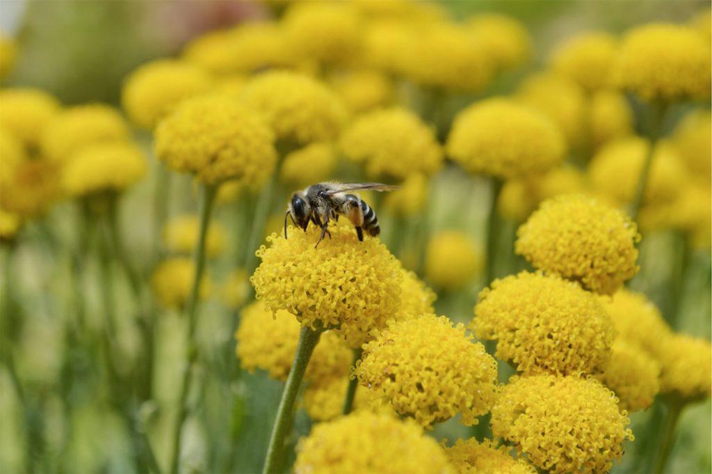 花粉症 アロマオイル