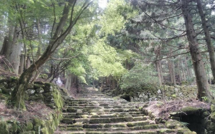 森林セラピー 森林浴