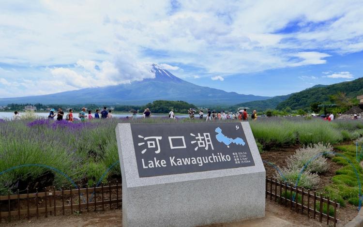 河口湖ハーブフェスティバル ラベンダー 大石公園
