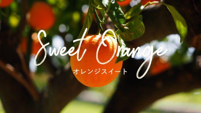 オレンジスイート精油