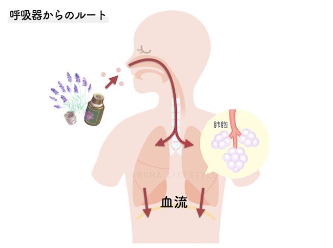 呼吸器から全身へ